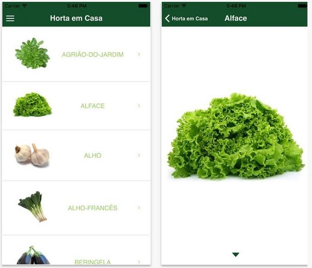 horta plantit alface